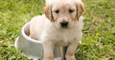 Why Training Your Puppy Is a Must